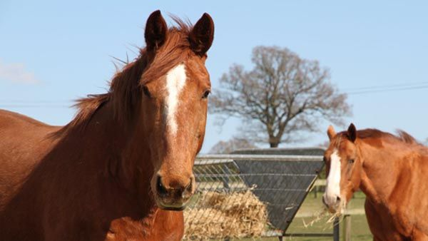 See the horses and ponies needing at home with World Horse Welfare here