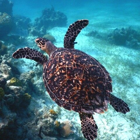 Swim away to the Marine Conservation Society to find out more about turtles