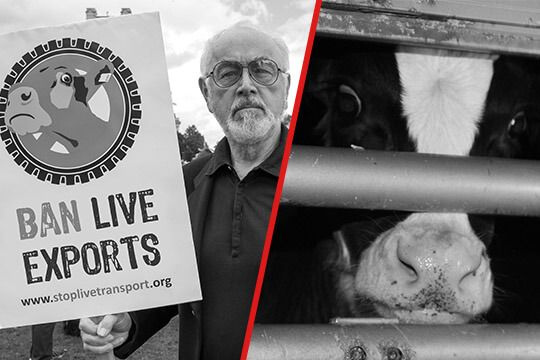 Please visit #BanLiveExports and take action
