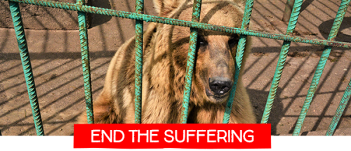 End the suffering of bears