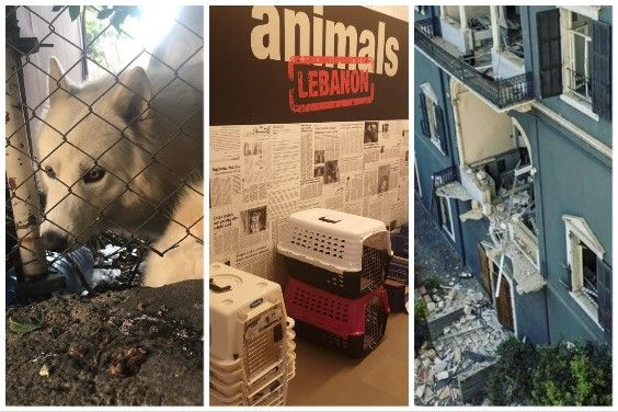Help animals affected by the Beirut explosion in Lebanon