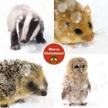 Christmas Cards from Wildlife Aid