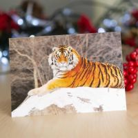 Tiger in the Snow from World Animal Protection