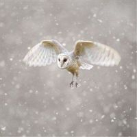 Christmas Cards from the Wiltshire Wildlife Trust
