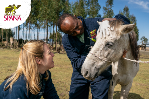 Take a look to see how you can help SPANA help working animals