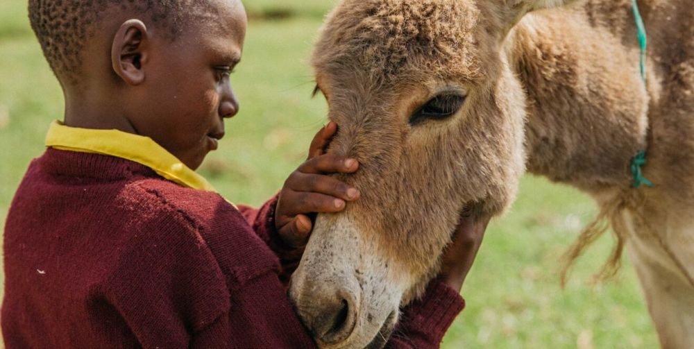 Please call on world leaders to ban the donkey skin trade