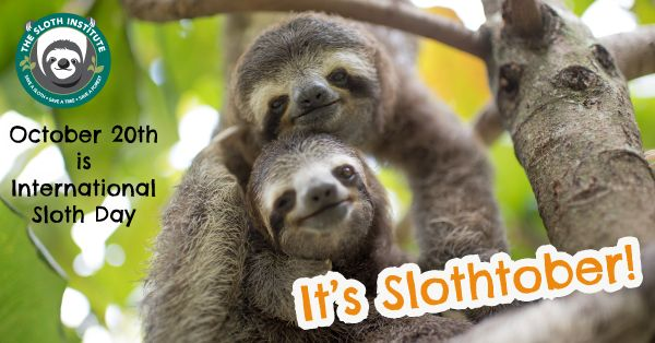 Find out more about International Sloth Day at the Sloth Institute