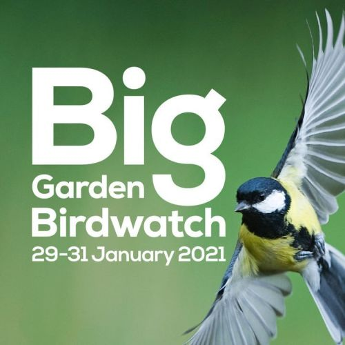 Sign up and take part - all it needs is a leisurely hour of birdwatching at home or in your local park!