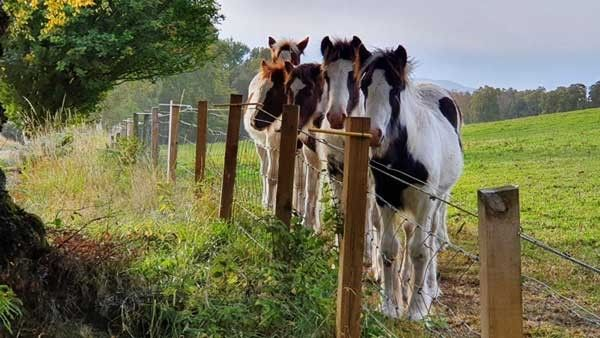 Join in and help World Horse Welfare help horses and ponies in 2021