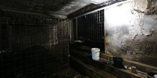 We can all help get Xuan and Mo out of these terrible conditions to safety and a bear sanctuary