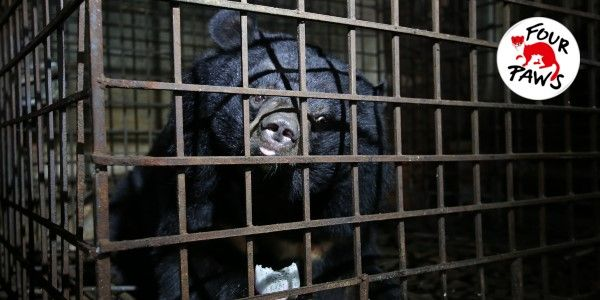 Please help Xuan and Mo leave these terrible cages and move to a new life