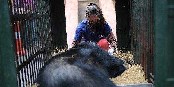 Rescue!  It's the start of a new life for bears Xuan and Mo