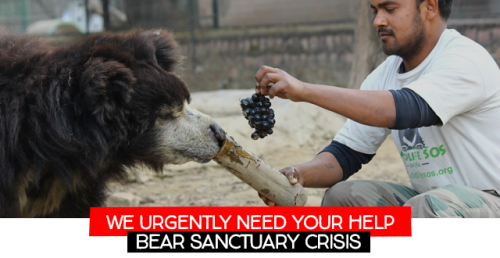 Please help the bears and bear carers at International Animal Rescue's sanctuaries