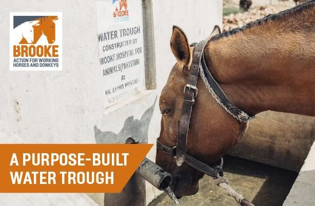 Give a purpose built water trough to hard working horses, donkeys and mules