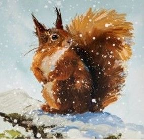 The National Trust for Scotland has some great Christmas cards, including this beautiful cheery red squirrel