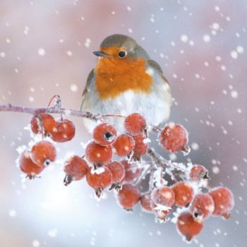 You could support the Worcestershire Wildlife Trust when you buy your Christmas cards