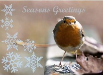 Brentwood Lodge Wildlife Hospital have lots of Christmas cards to choose from