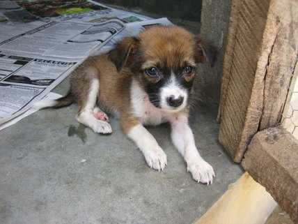 Could you help Animal SOS Sri Lanka care for this little pup?
