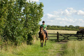 Help retired race horses