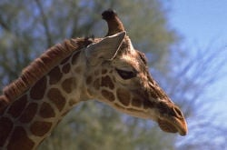 Giraffe Charities