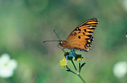 Click here to go to Butterfly Conservation
