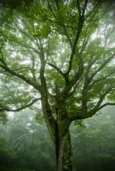 Every tree matters