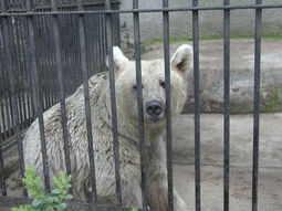 Bornfree Brno zoo, Czech credit BFF