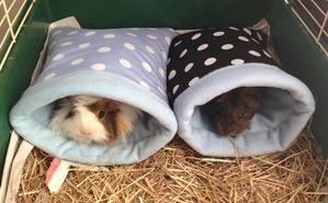 Georgie and Josephine