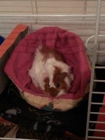 murphy cuddler 2