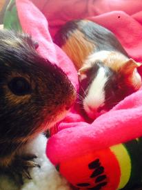 penny and tiffany