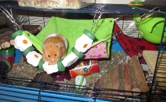 hamster mo