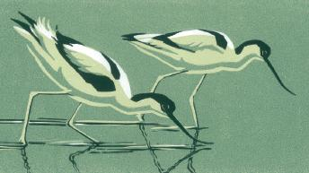 Robert Gillmor Tea Towel, Two Avocets