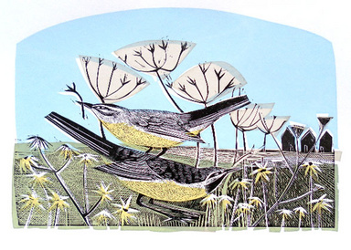 Grey wagtails and daisy field tea artwork