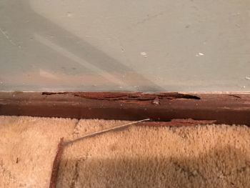 Termite in Skirting