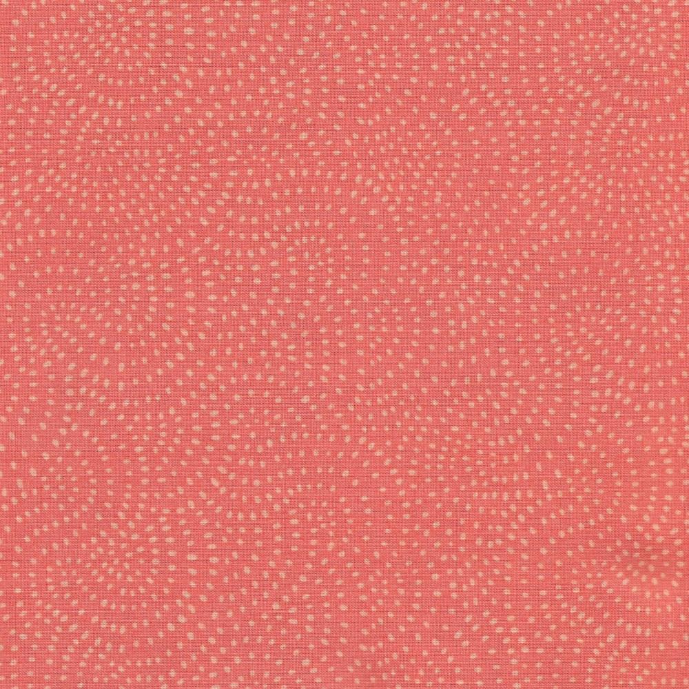 Dashwood Studio's Twist 1155 Coral