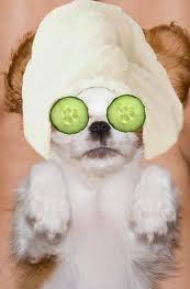 dog facial stockport