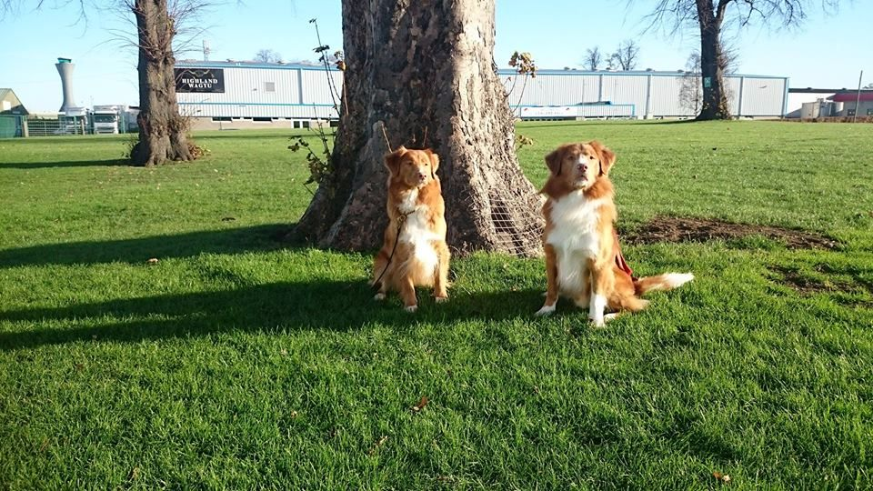 Kyte & Alfie GBOS Nov 17