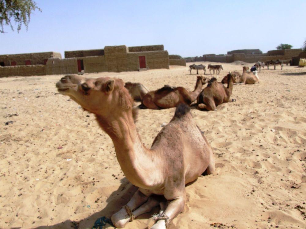 tim camel