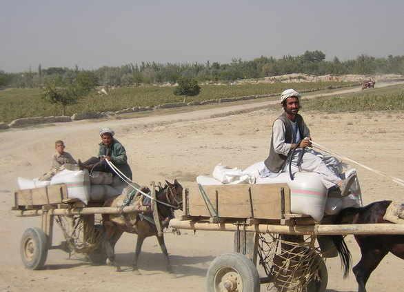 Afghanistan man on cart