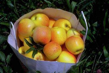 Apple Spice Simmering Granules 200g
