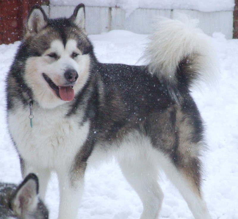 Razor dec 2010 snow