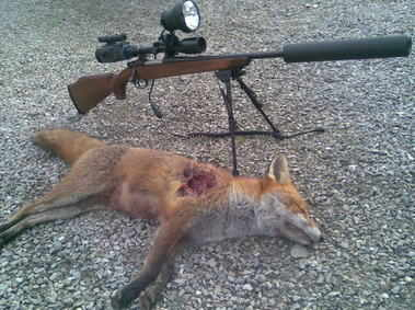 fox and rifle