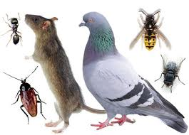 all pest animals