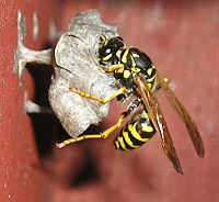 wasp building 1