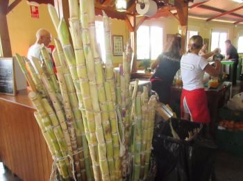 Puntagorda weekend market sugar cane drinks la palma