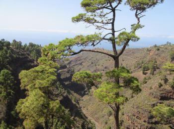 View from Puntagorda mirador look-out point la palma