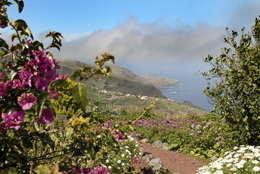 monique garden to west