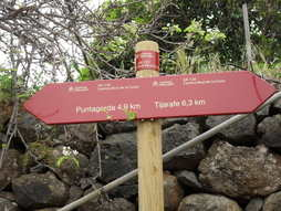 walking GR130 distances puntagorda to tijarafe