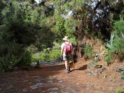 walking to los llanos, pine trail la palma