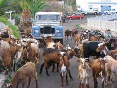 trekking gr130 goats don pedro